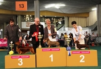 International Dog Show Losanna (CH) 21.10.12