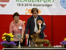 International Dog Show Klagenfurt (A) 18.06.16